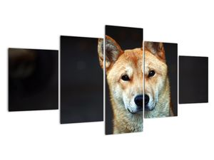 Obraz psa (V021189V150805PCS)