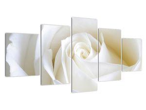 Slika bele vrtnice (V021208V150805PCS)