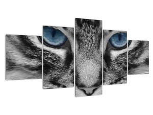 Obraz kočky (V021221V150805PCS)