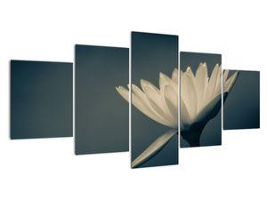 Obraz květiny (V021223V150805PCS)