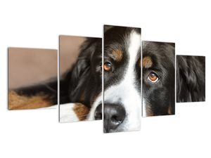Obraz psa (V021268V150805PCS)