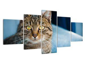 Obraz - Kočka domácí (V021323V150805PCS)
