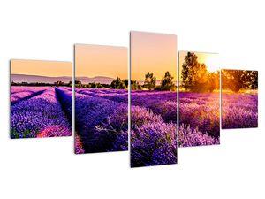 Obraz levandulového pole, Provence (V021590V150805PCS)