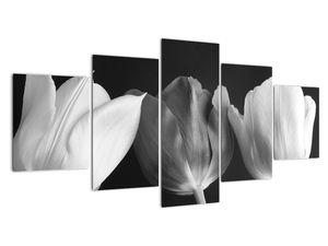 Kép - fekete-fehér tulipán virág (V021916V150805PCS)