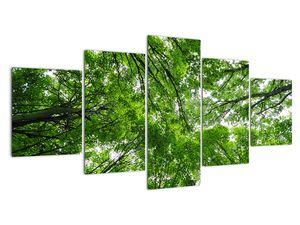 Kép - Kilátás a fák tetejére (V021918V150805PCS)