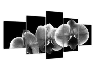 Obraz květu orchideje (V022015V150805PCS)