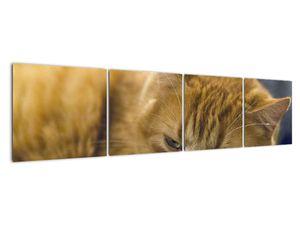 Obraz mačky (V020192V16040)