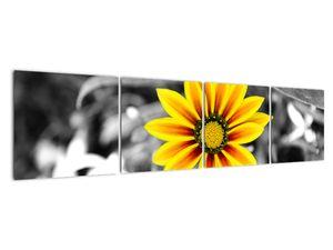 Obraz žluté květiny (V020361V16040)
