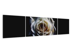 Obraz bílé růže (V020370V16040)