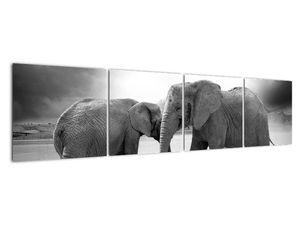 Obraz - černobílí sloni (V020398V16040)