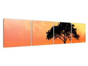 Obraz stromu v západu slunce (V020480V16040)