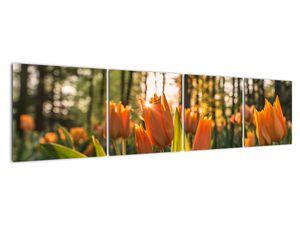 Obraz - oranžové tulipány (V020552V16040)