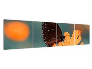Obraz - motýl na oranžové květině (V020577V16040)