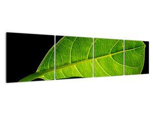 Obraz - zelený list (V020628V16040)
