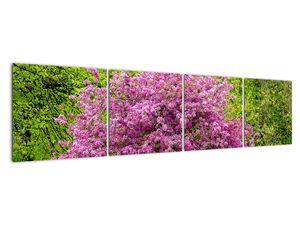Obraz rozkvetlého stromu na louce (V020654V16040)
