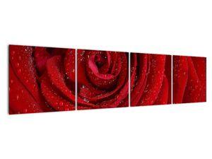 Obraz - detail růže (V020684V16040)