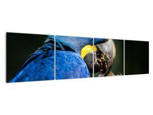 Obraz papouška (V020714V16040)