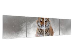 Obraz bežiaceho tigra v snehu (V020719V16040)