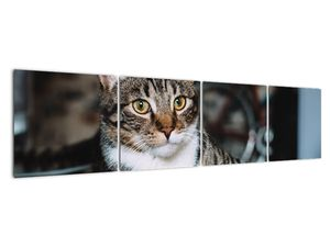 Obraz kočky (V020889V16040)