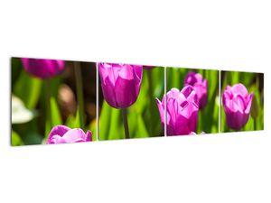 Obraz tulipánov na lúke (V020893V16040)
