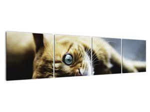 Obraz kočky (V020963V16040)