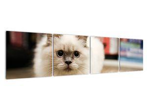 Obraz bílé kočky (V021124V16040)
