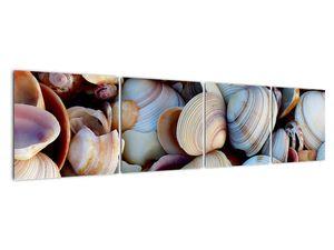 Kagyló képe (V021131V16040)