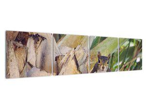 Obraz veverky na stromu (V021177V16040)
