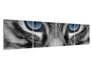 Obraz kočky (V021221V16040)