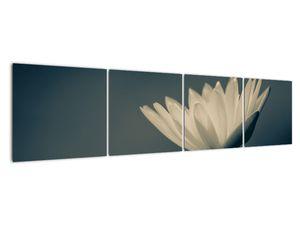 Obraz květiny (V021223V16040)