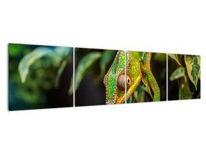 Obraz chameleona (V021236V16040)