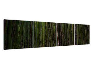 Obraz - Medzi bambusy (V021324V16040)
