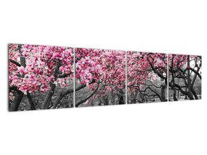 Obraz stromů Magnolíie (V021344V16040)