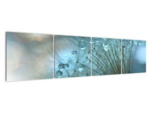 Obraz - Pampeliška - petrolej (V021451V16040)