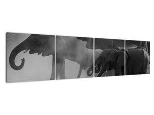 Obraz slonů - černobílý (V021575V16040)