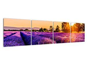 Obraz levandulového pole, Provence (V021590V16040)