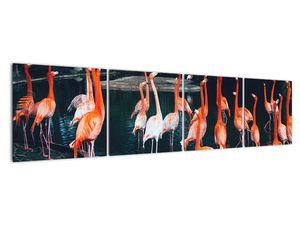 Obraz stáda plameňáků (V021626V16040)
