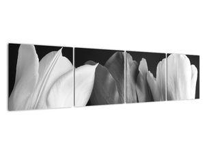 Kép - fekete-fehér tulipán virág (V021916V16040)