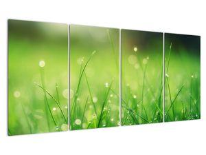 Obraz - rosa na trávě (V020169V16080)