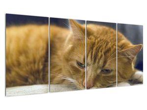 Obraz mačky (V020192V16080)