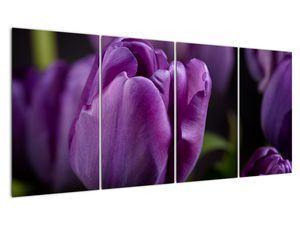 Obraz květů tulipánů (V020215V16080)