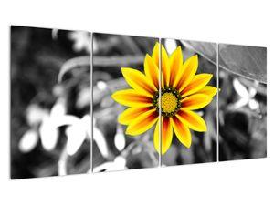 Obraz žluté květiny (V020361V16080)