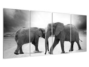 Obraz - černobílí sloni (V020398V16080)