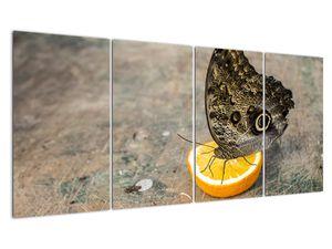 Obraz motýla (V020454V16080)