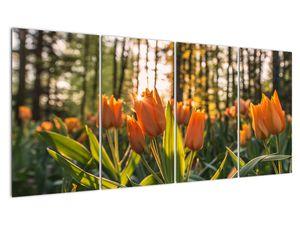 Obraz - oranžové tulipány (V020552V16080)