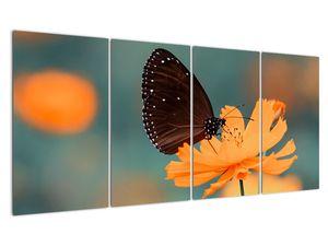 Obraz - motýl na oranžové květině (V020577V16080)