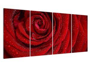 Obraz - detail růže (V020684V16080)