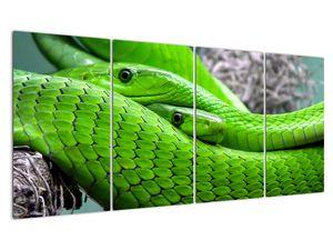 Obraz zelených hadů (V020689V16080)