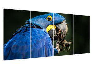 Obraz papouška (V020714V16080)