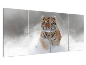 Obraz bežiaceho tigra v snehu (V020719V16080)